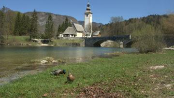 Bohinj and Bled
